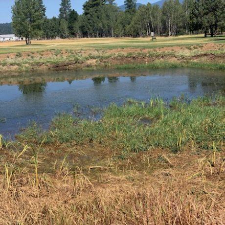 Pond Prior to restoration